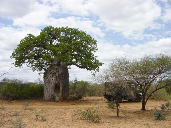 mozambique-sian-owen